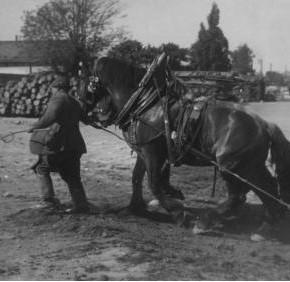 Pferdegespann bei der Arbeit am Donaukanal, vermutlich um 1930