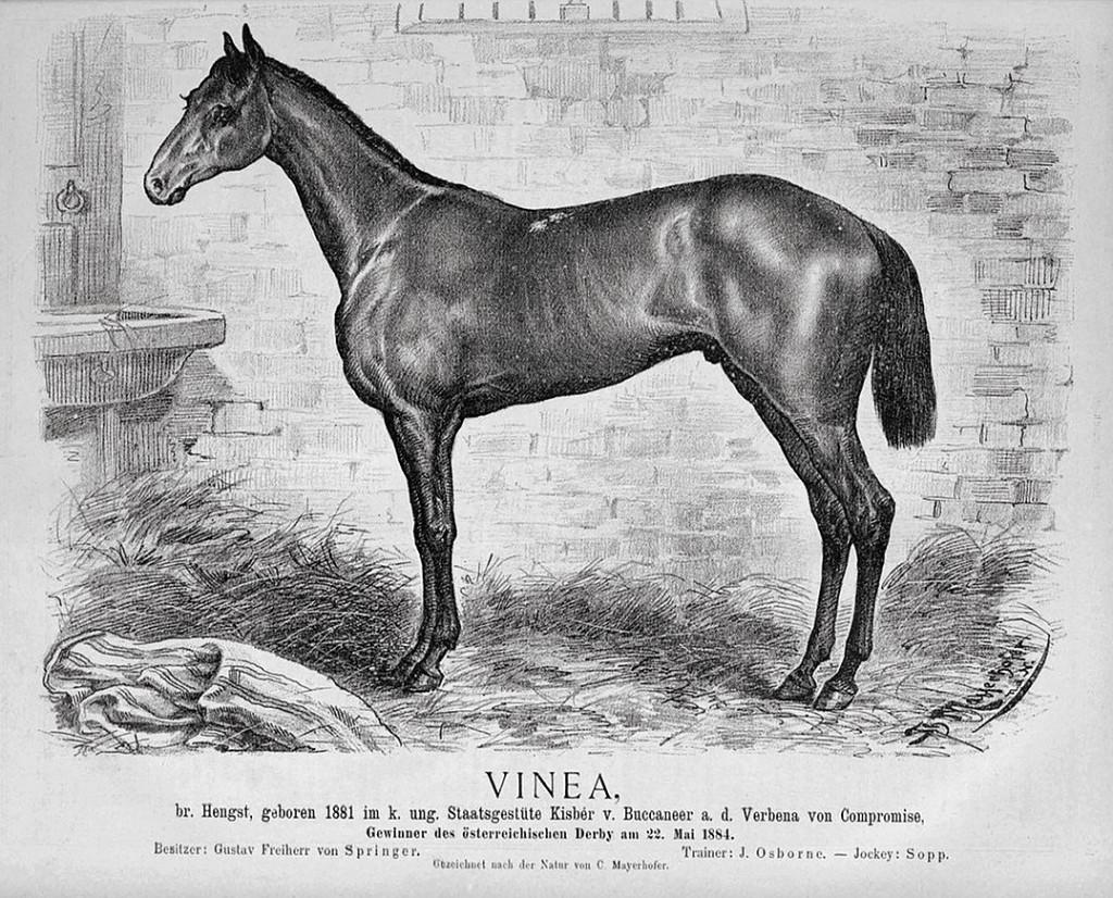 Gustav von Springers Pferd Vinea (1884)